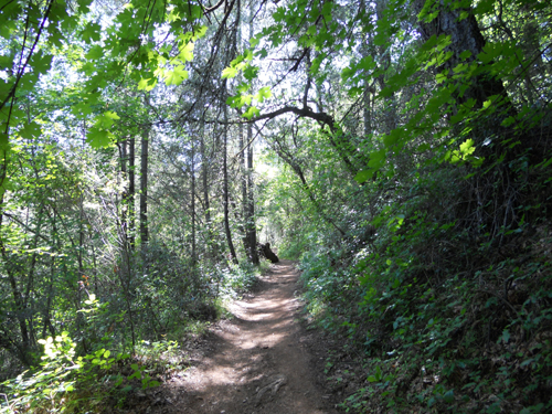 Quarry Trail, Auburn, California